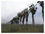 Septembre 2012 : Visite des marais de villa, destination ornithologique de Lima  Visita de los pantanos de Villa, destino de ornitologia de Lima