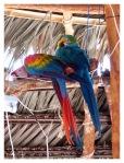 Septembre 2012 : Courte excursion dans la jungle centrale (La Merced)  Corta excursion en la selva central (La Merced)