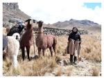 Participation au chargement des lamas