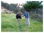 Juin 2013 : Visite du terrain du Sr. Rosemberg  Visita del terreno del Sr Rosemberg