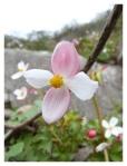 Juillet 2013 : Exploration aux Lomas de Lucumo  Exploracion en las lomas de Lucumo