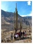 Aout 2013 : Trek dans le canyon Cotahuasi (Arequipa) - Le groupe dans la foret de Cactus  Trek en el canyon de Cotahuasi (Arequipa) - El grupo el el bosque de cactus