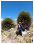 Septembre 2013 : Trek de l'apu Pariacaca avec Annaïg et Gauthier - La Puya Raimondii  Trek del apu Pariacaca con Annaïg y Gauthier - Puya Raimondii